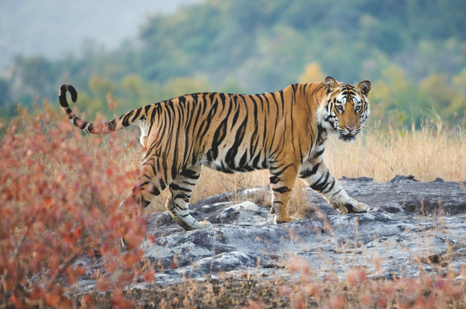 Luxury-Safari-Holiday-India-12
