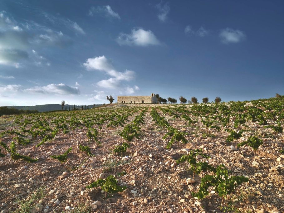 Contemporary-Winery-Design-Lebanon-11