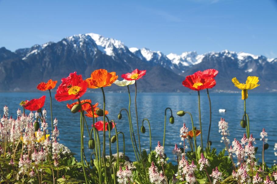 Geneva-Switzerland-Holidays-Adelto_12